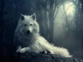 wolfjpg